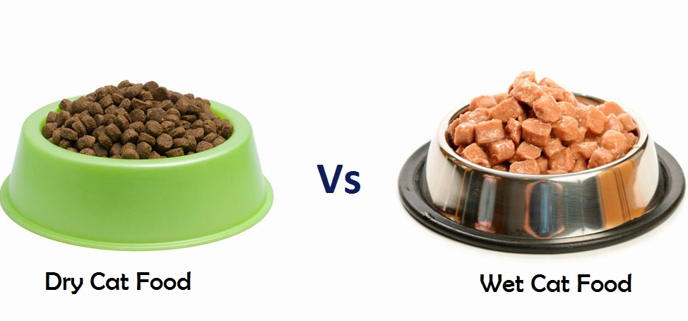 wet cat food vs dry cat food