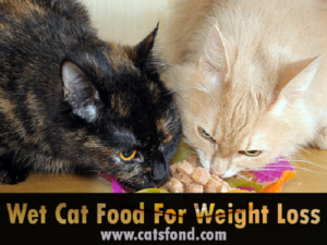 Top 10 Best Wet Cat Food for Weight Loss