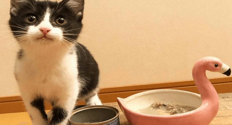 Best Cat Food For Kittens