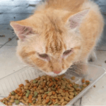 10 Best Low Protein Cat Food : Reviewed